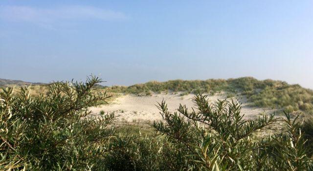 Zand in de Meeuwenduinen