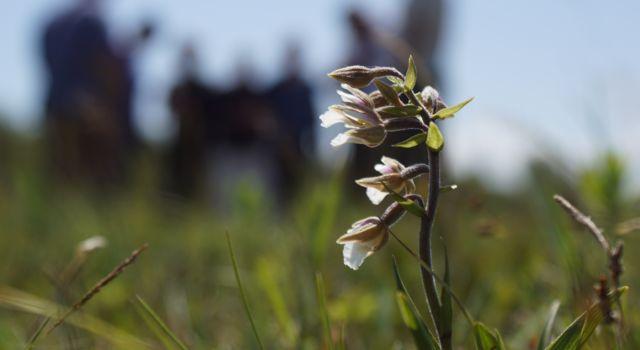 Grevelingen bloemenzee - foto Piet van Loon