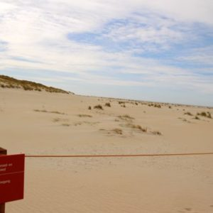 strandbroeders, Texel. Staatsbosbeheer