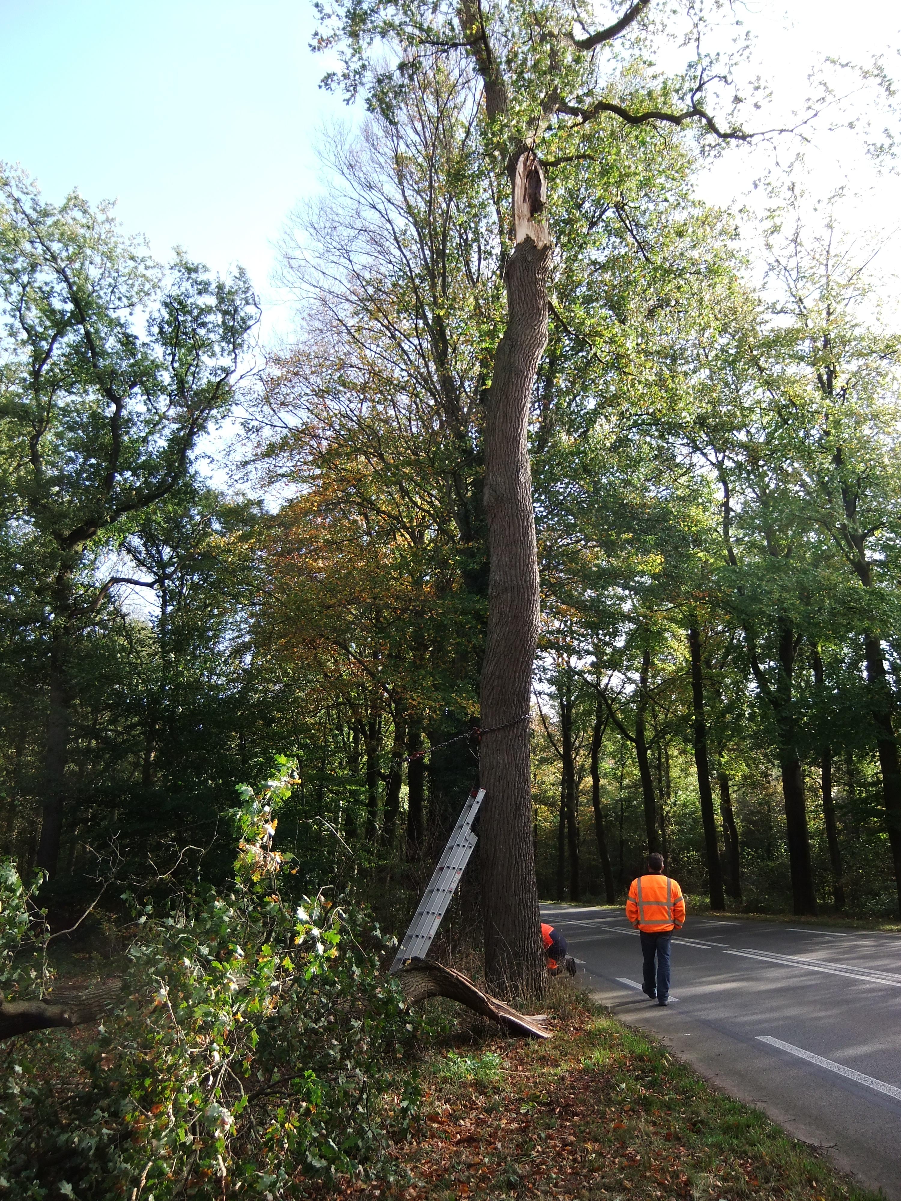 Deze eik aan de Vordensweg is door de storm een zware tak verloren, daardoor is hij te onveilig geworden en moest hij omgezaagd.
