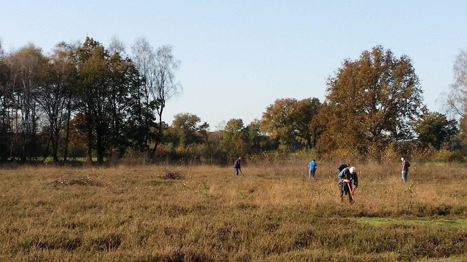Deelnemers steken berkjes uit de heide