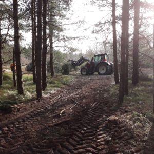 Boswerkzaamheden op Ameland