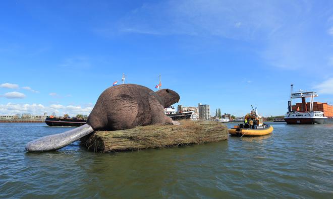 De reusachtige bever is gemonteerd op een ponton. (foto: Jacques van der Neut)