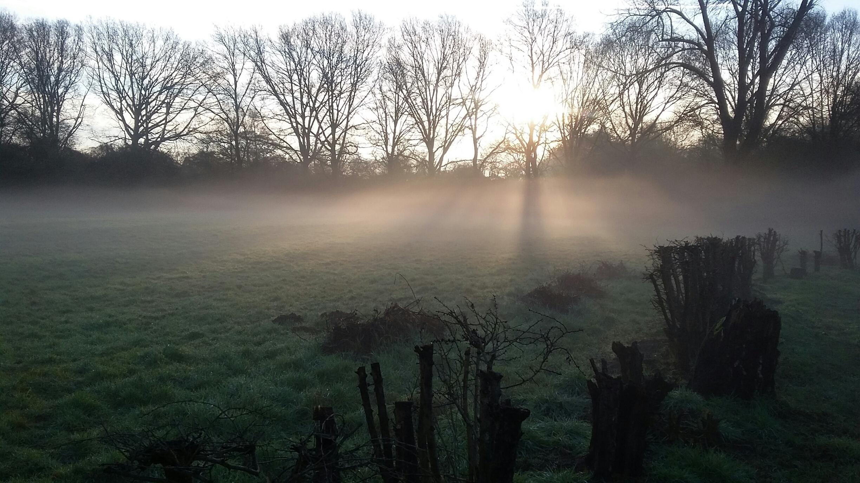 wallen mist