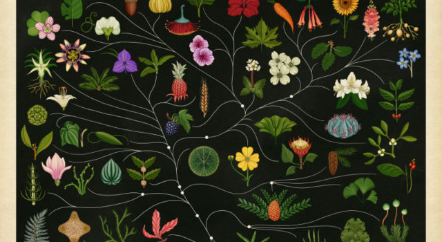 het-plantenboek-1