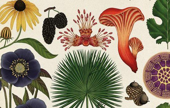 het-plantenboek
