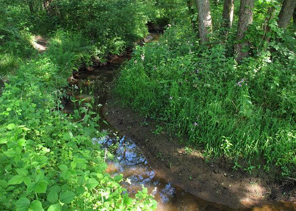 Het Anloërdiepje, een van de velde pareltjes in het Drentsche Aa-gebied.
