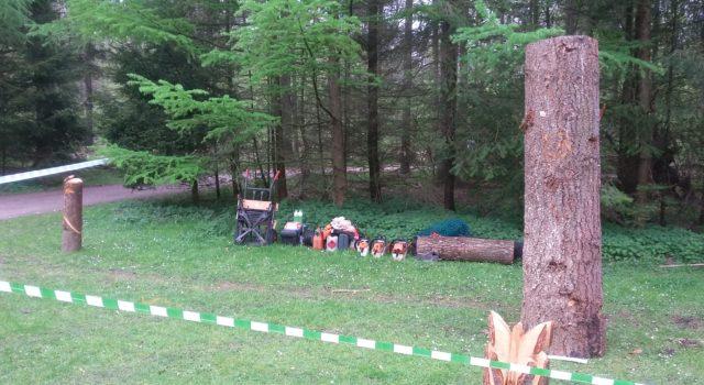 Douglasstam aan het begin van de carvingcup