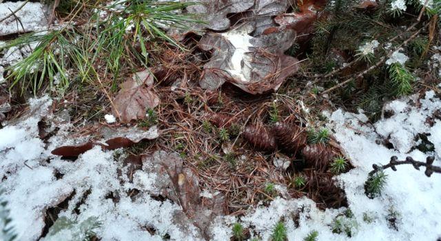 diersporen houtsnip
