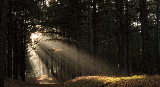 Bomen (foto: Celina Polane)