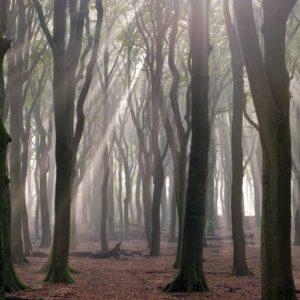 Bomen leiden een verborgen leven (foto: Ernst Dirksen)