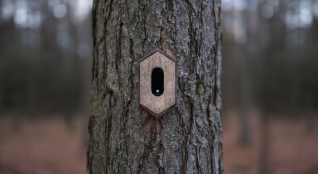 Een Pixi aan een boom (foto By Knelis)