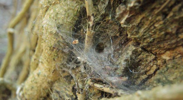 Web van een trechterspin