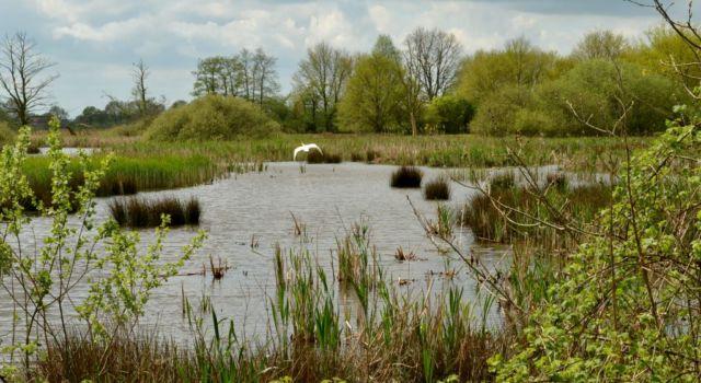 Het moerasgebied bij Gees waar veel verschillende vogels op af komen