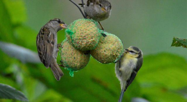 Vogeltjes op bollen
