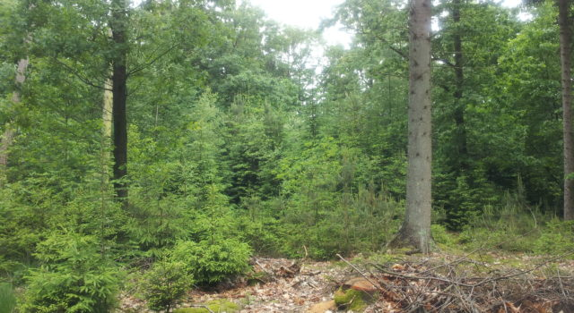 natuurlijk en gevarieerd bos