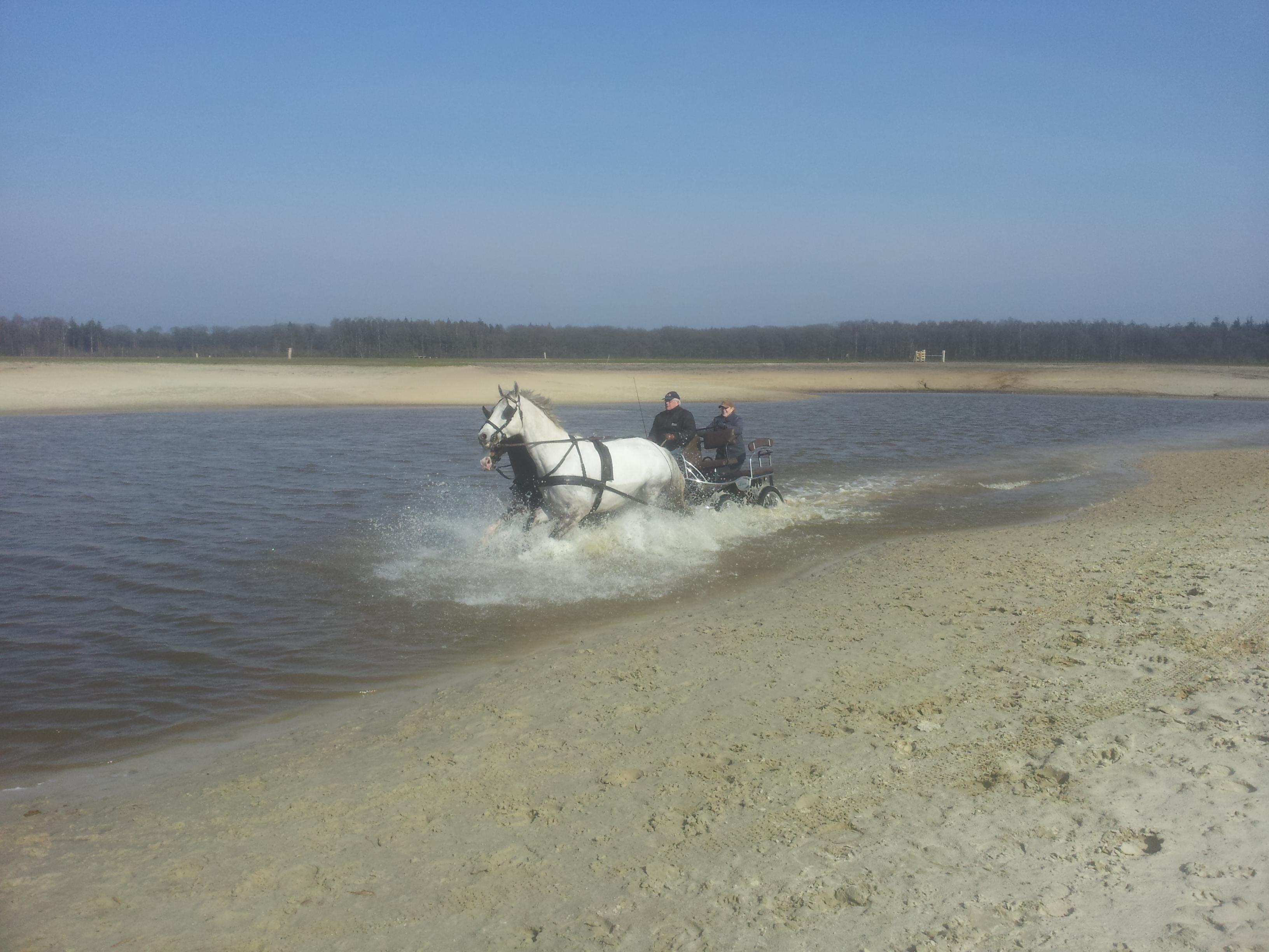 paarden door spartelvijver