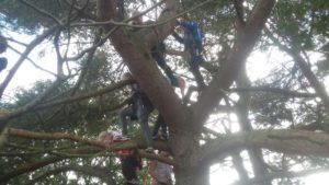 Klauteren door boomkruin