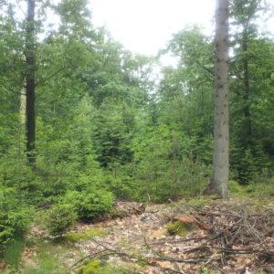 natuurlijk bos Drents-Friese Wold