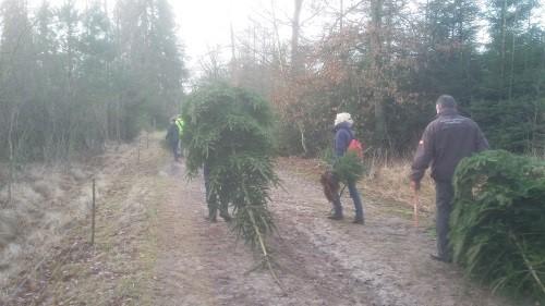zelf een kerstboom uit het bos halen