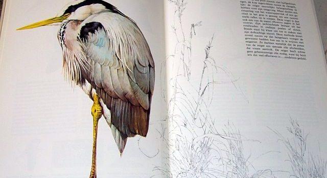 De reiger in Het Beste Vogelboek