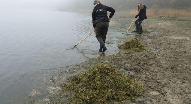 Oogsten van losgeslagen oeverkruid bij het Canadameer. (foto Widmar van der Meer)