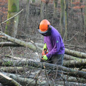 Opruimen van stormhout
