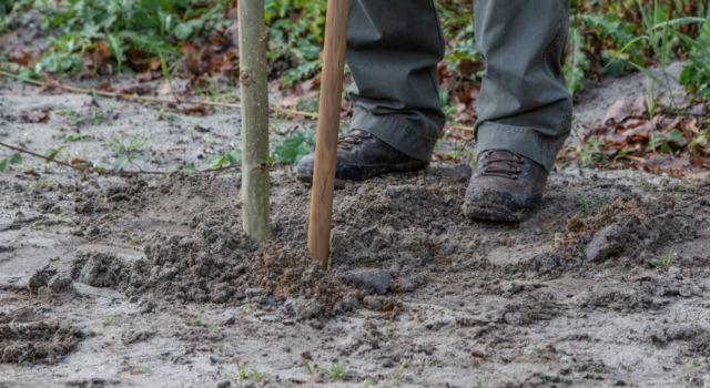 Close-up van boom dat wordt aangeplant in grond