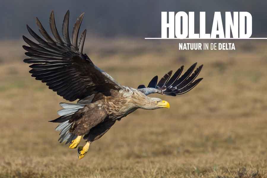 Binnenkort in de bioscoop: Holland-Natuur in de delta