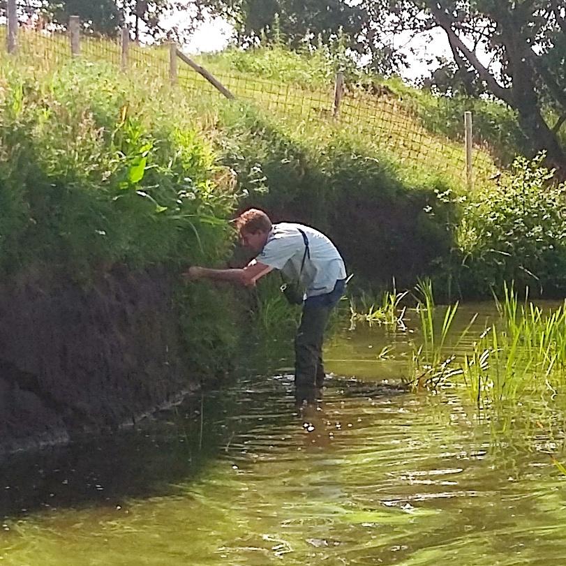 Boswachter Durk Venema knipt het gras terug dat over de nesten is gegroeid.
