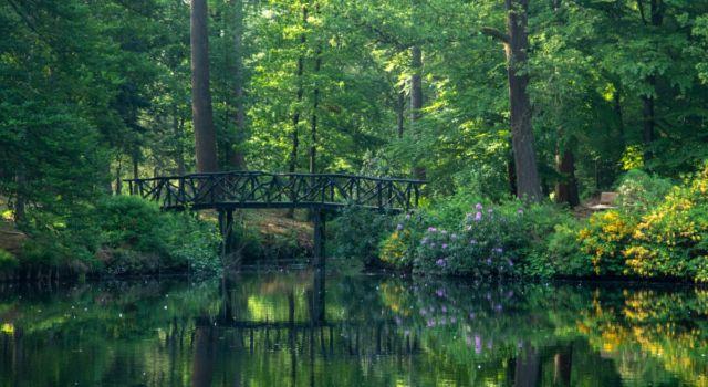 brug over vijver in koepelbosch