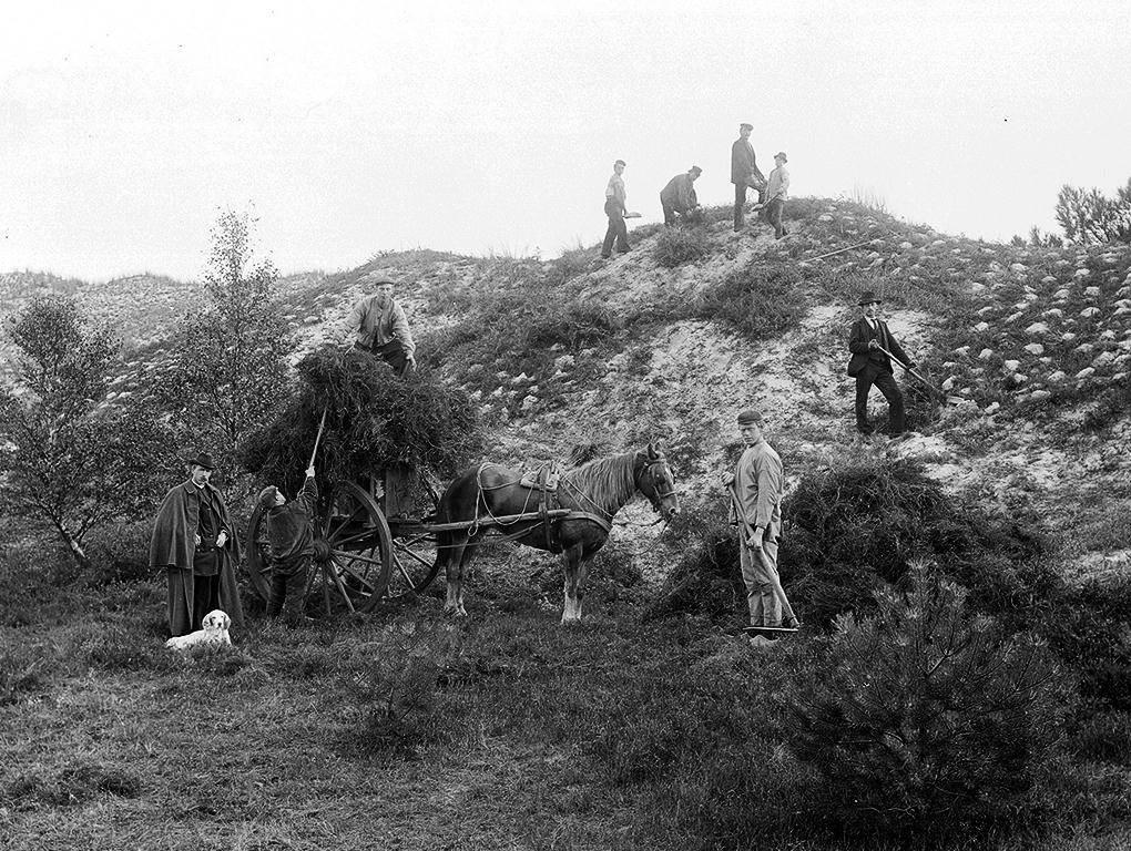 bosbeheer 1899