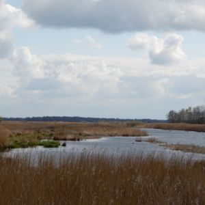 't Roegwold - Ae's Woudbloem provincie Groningen