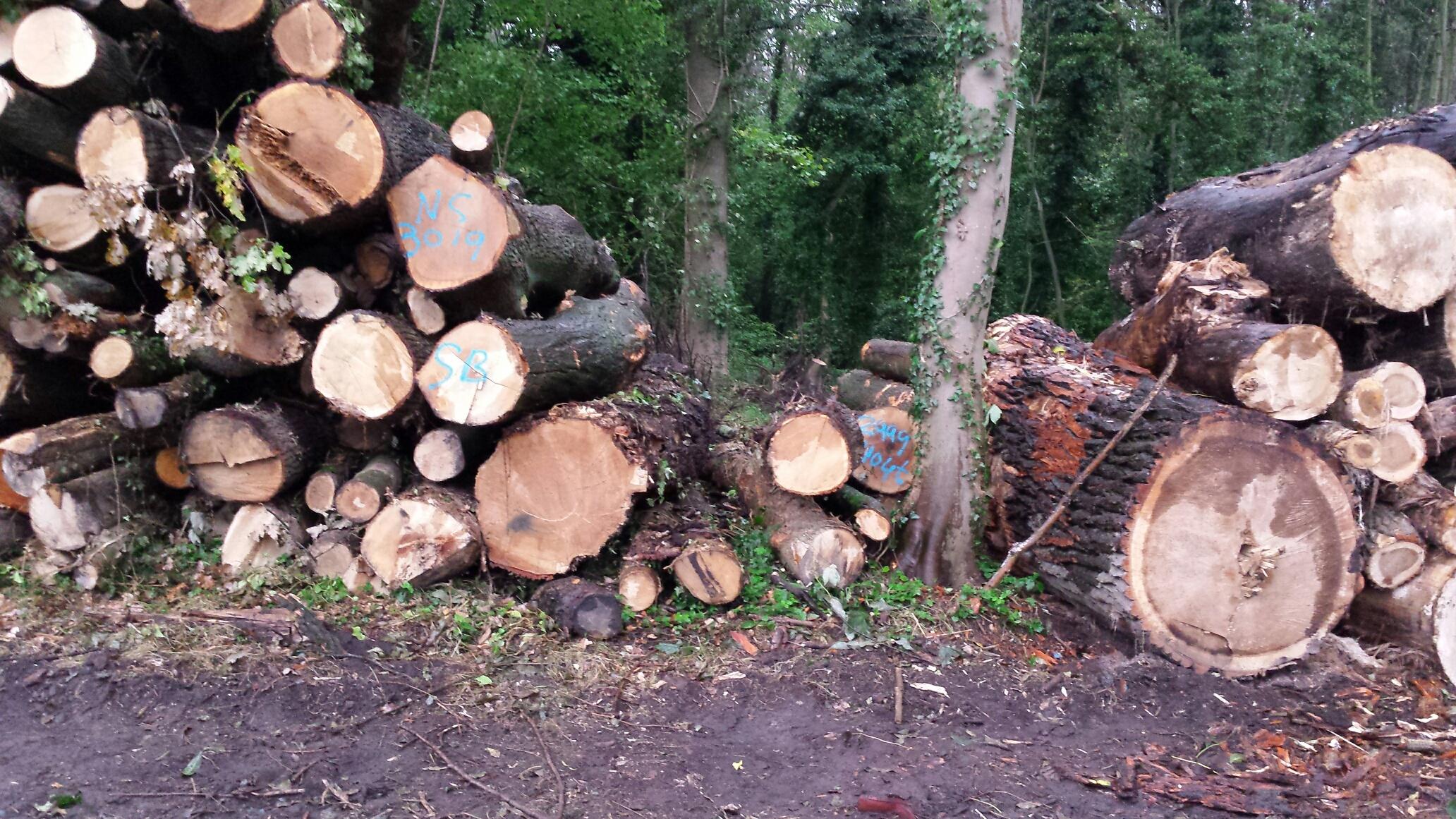Houtstapels na oogst in het Bunderbos