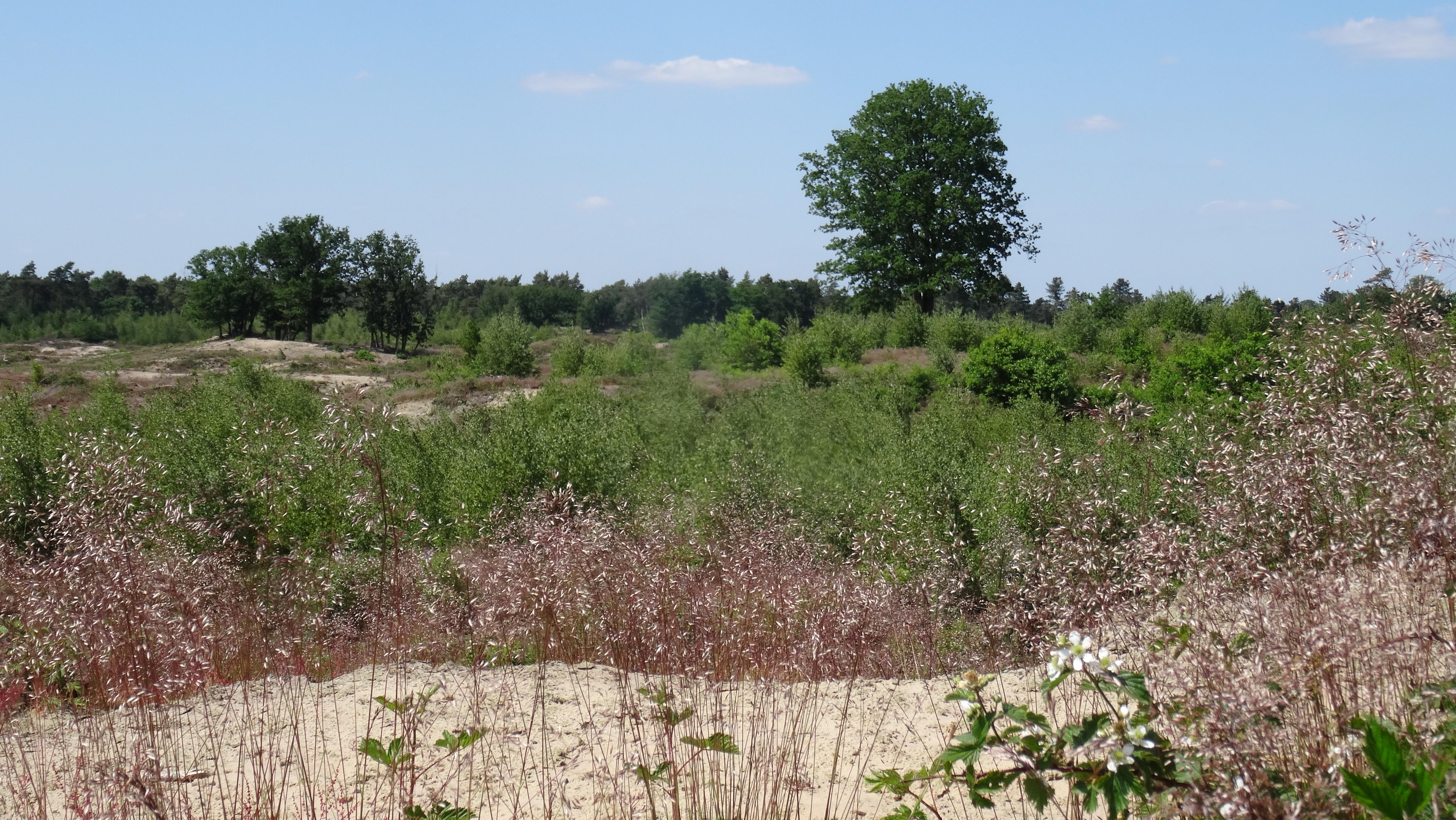 Schaaks Heide