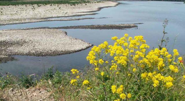 Bloemen in de Maasvallei