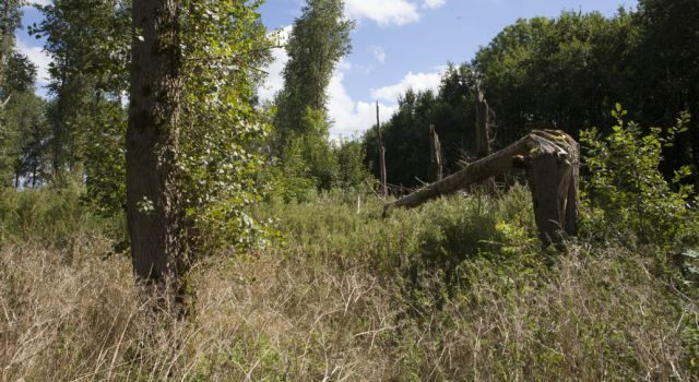 voorjaar in het Purmerbos