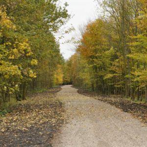 De opgeknapte paden in het Noorderbos.