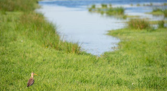 De Amsterdam Wetlands