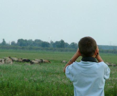 jongen met verrekijker in Oostvaardersplassen