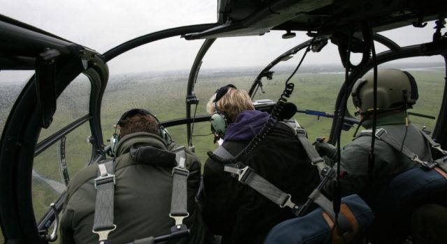 helikoptertelling in de Oostvaardersplassen in oktober 2015