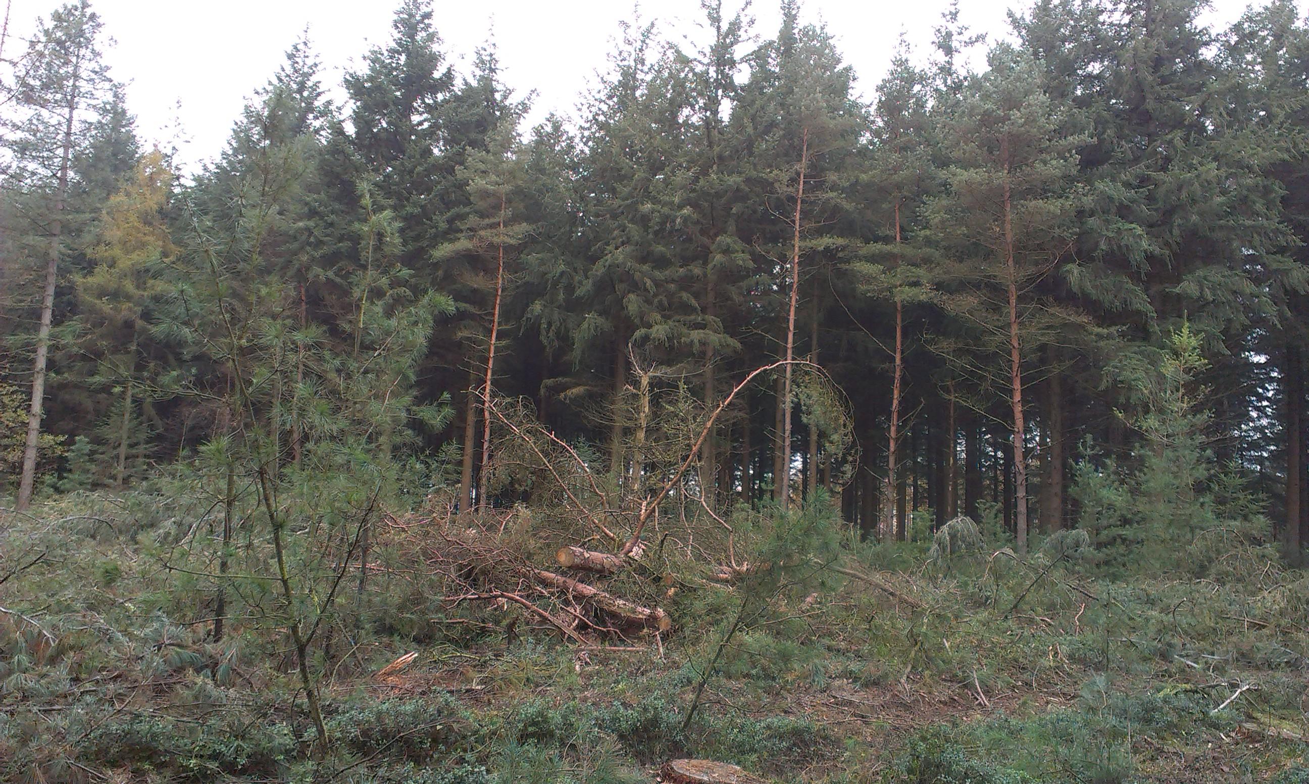 bosbeheer2