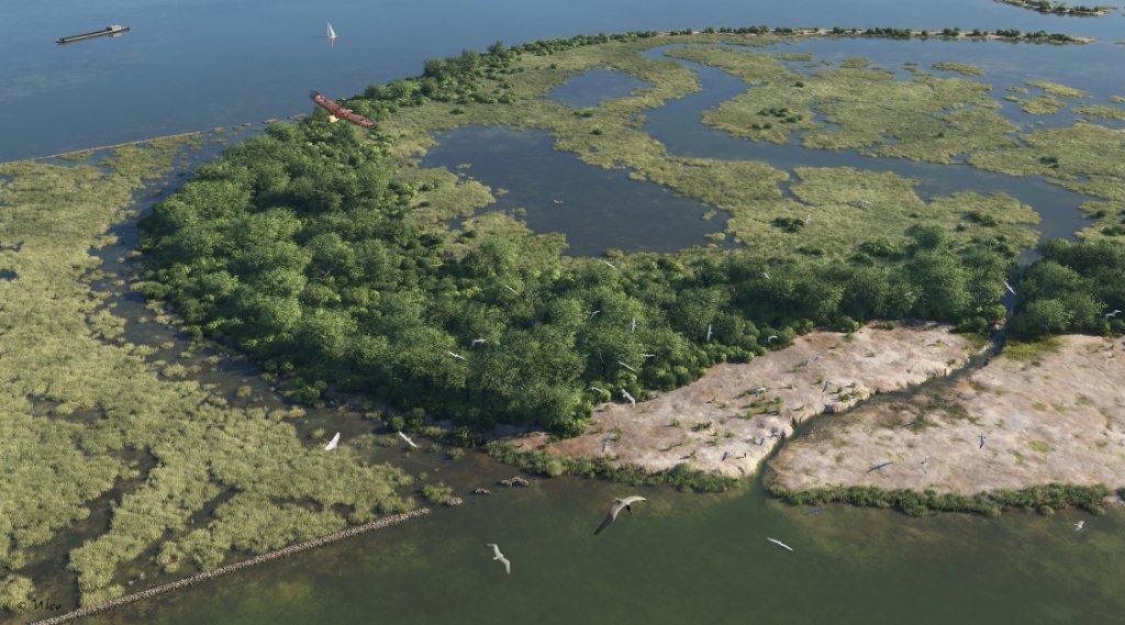 De meanderende geul en het nieuwe rietveld op de kop van het eiland als het project is afgerond (Impressie: Ulco Glimmerveen).