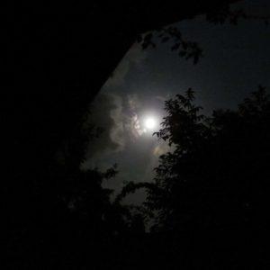 maan tussen de bomen