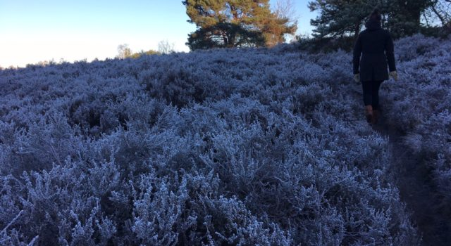 Nature Quest winter