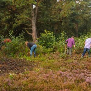 Vrijwilligers aan het werk op de Sallandse Heuvelrug. Foto: Adri Kodde