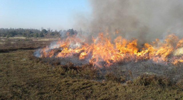 Het heide branden gebeurt op kleine schaal op meerdere plekken. Foto: Arie Rouwhof