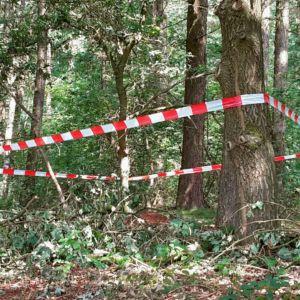 lint bos mierenhoop
