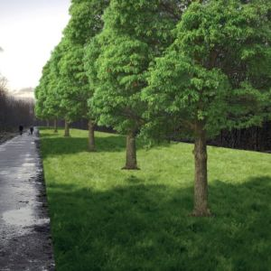 nieuwe bomen