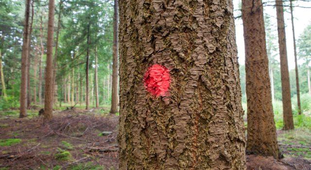 Een aangestipte boom